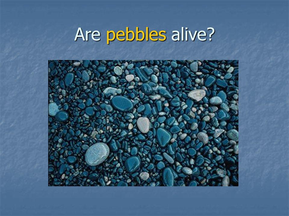 Are pebbles alive