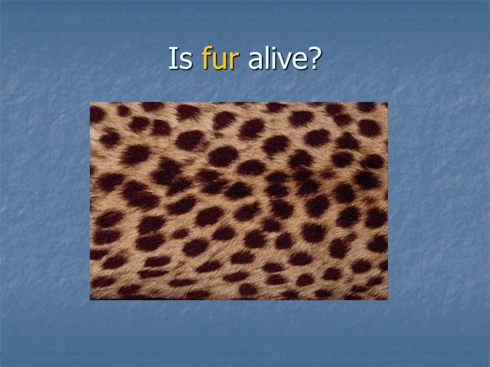 Is fur alive