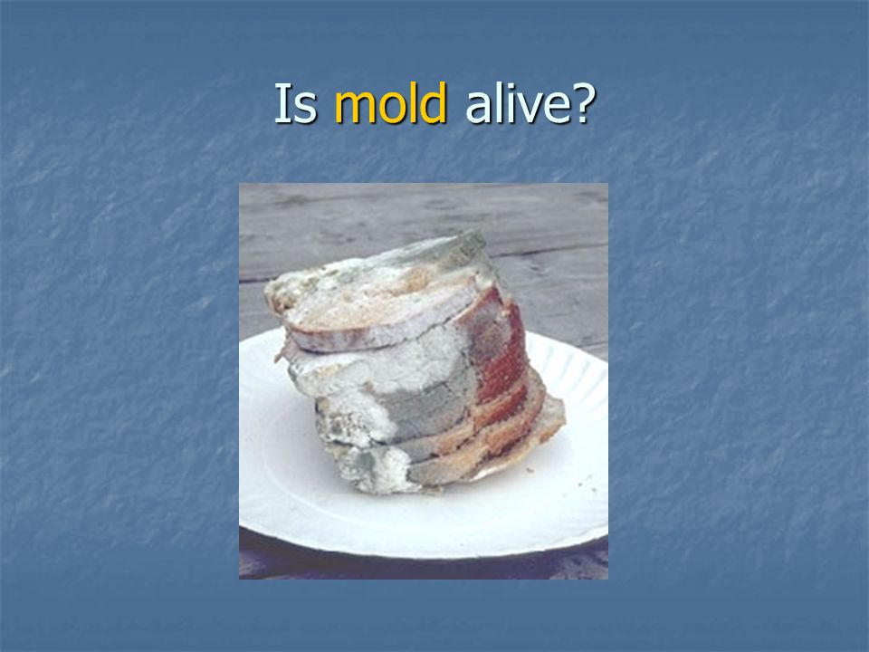 Is mold alive