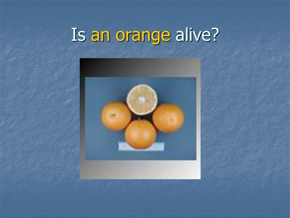 Is an orange alive
