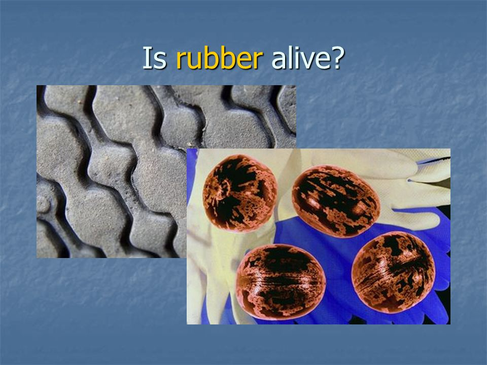 Is rubber alive