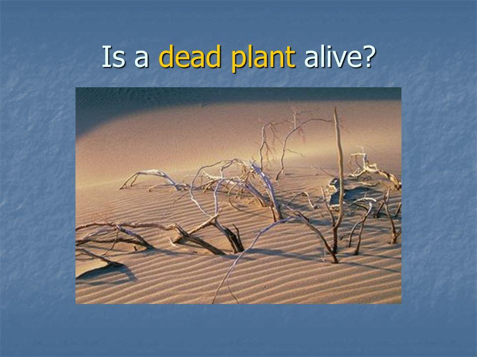 Is cotton (Q-tip) alive?