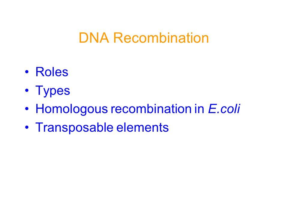 recBCD Pathway of Homologous Rec.
