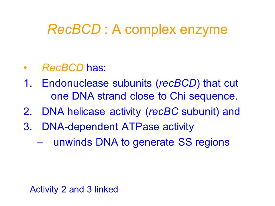 RecBCD : A complex enzyme RecBCD has: 1.Endonuclease subunits (recBCD) that cut one DNA strand close to Chi sequence. 2.DNA helicase activity (recBC s
