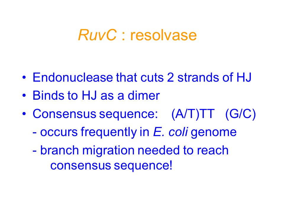 RuvC : resolvase Endonuclease that cuts 2 strands of HJ Binds to HJ as a dimer Consensus sequence: (A/T)TT (G/C) - occurs frequently in E. coli genome