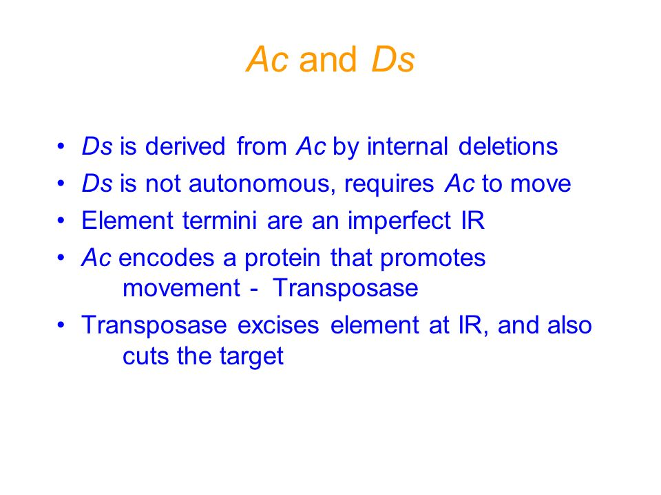 Ac and Ds Ds is derived from Ac by internal deletions Ds is not autonomous, requires Ac to move Element termini are an imperfect IR Ac encodes a prote