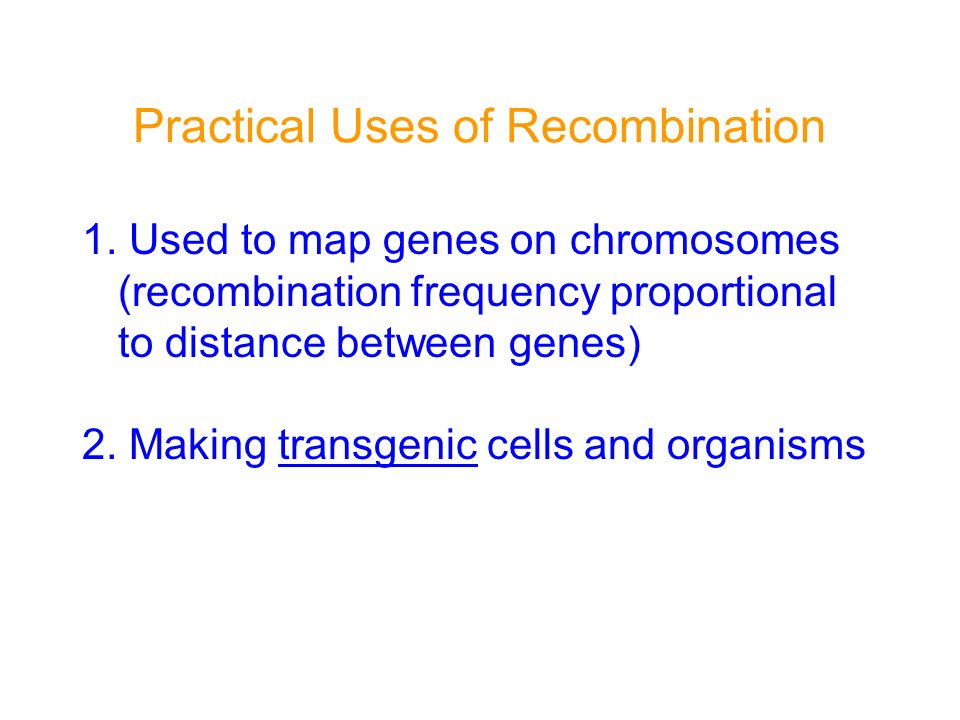Practical Uses of Recombination 1. Used to map genes on chromosomes (recombination frequency proportional to distance between genes) 2. Making transge