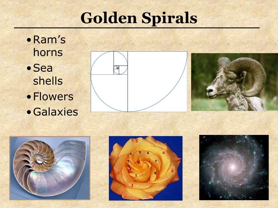 Rams horns Sea shells Flowers Galaxies Golden Spirals