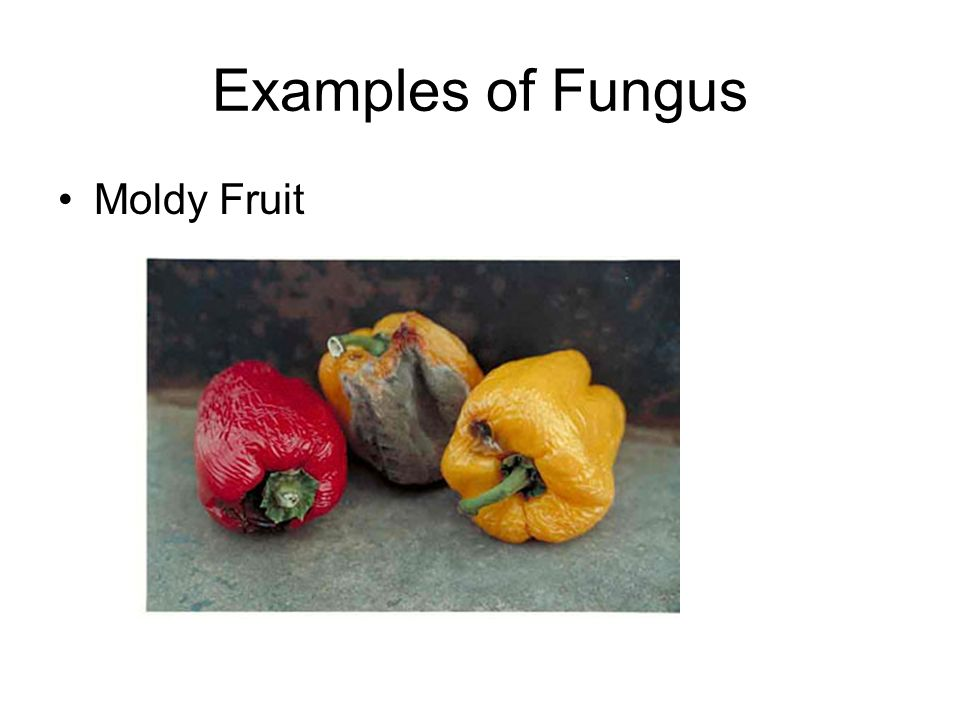 Examples of Fungus Moldy Fruit