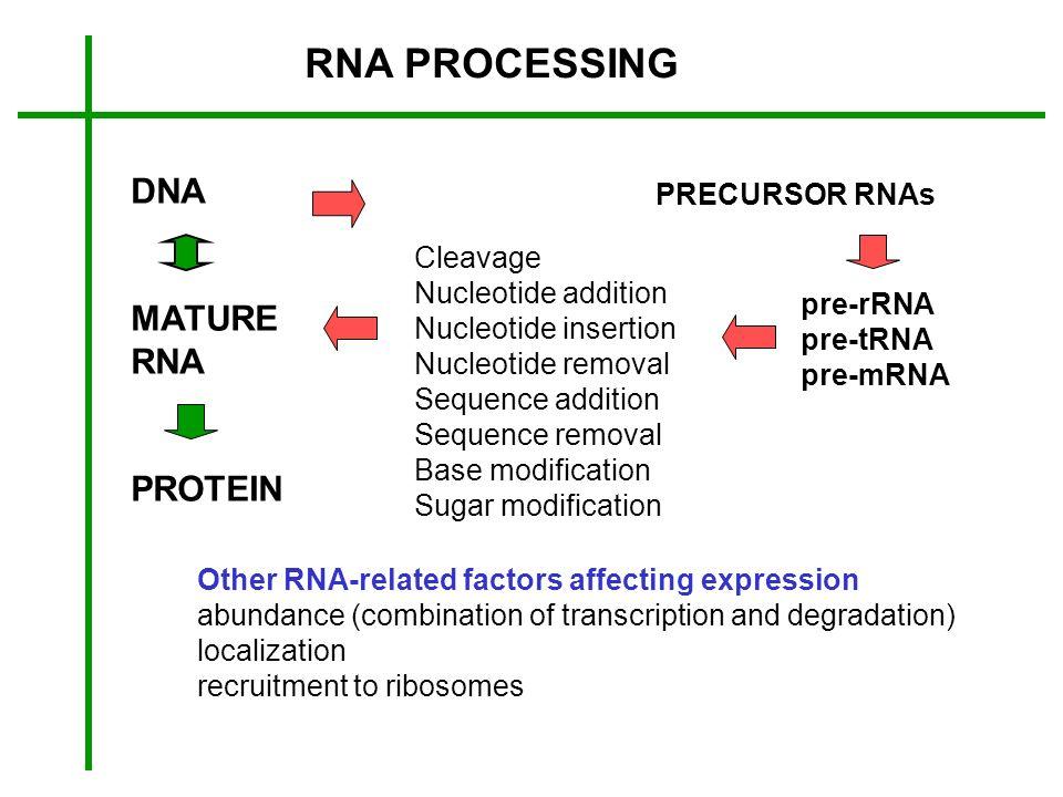 RNA PROCESSING DNA MATURE RNA PROTEIN PRECURSOR RNAs pre-rRNA pre-tRNA pre-mRNA Cleavage Nucleotide addition Nucleotide insertion Nucleotide removal S