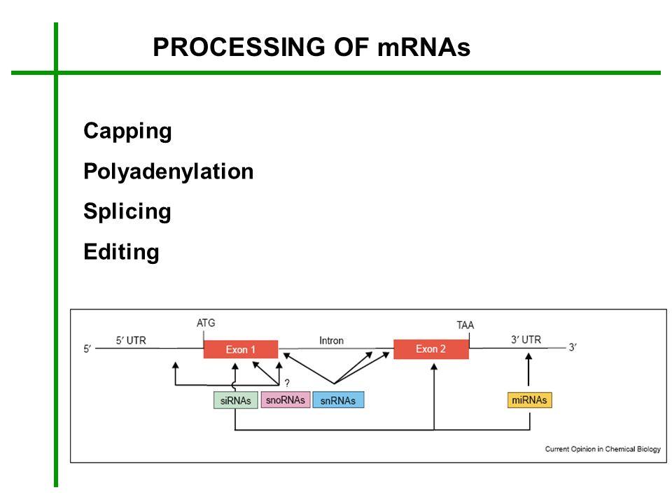 PROCESSING OF mRNAs Capping Polyadenylation Splicing Editing