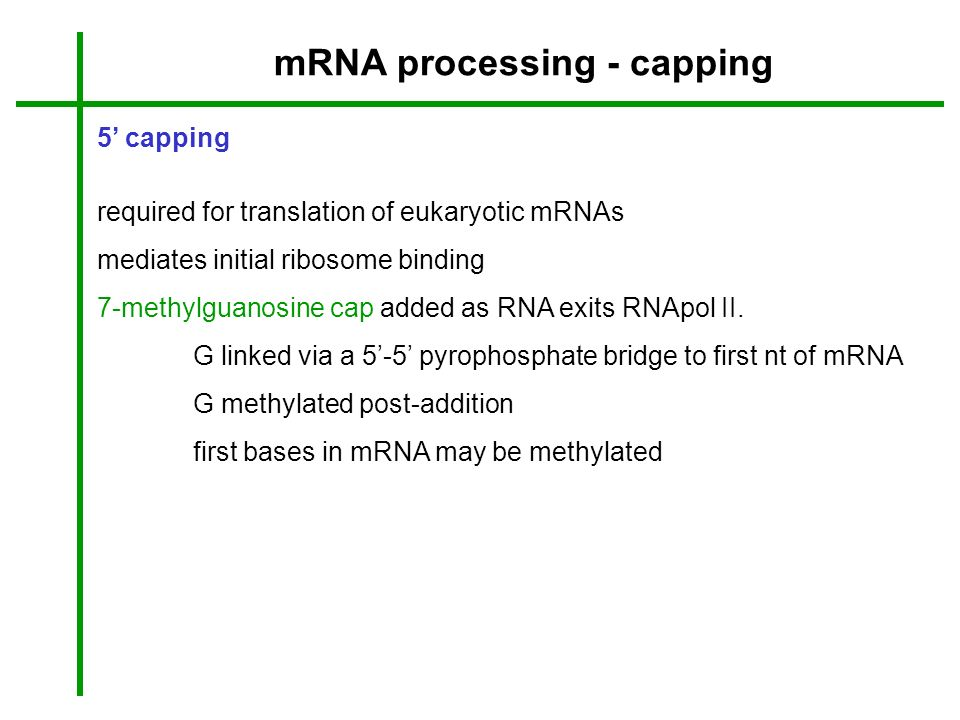 mRNA processing - capping 5 capping required for translation of eukaryotic mRNAs mediates initial ribosome binding 7-methylguanosine cap added as RNA