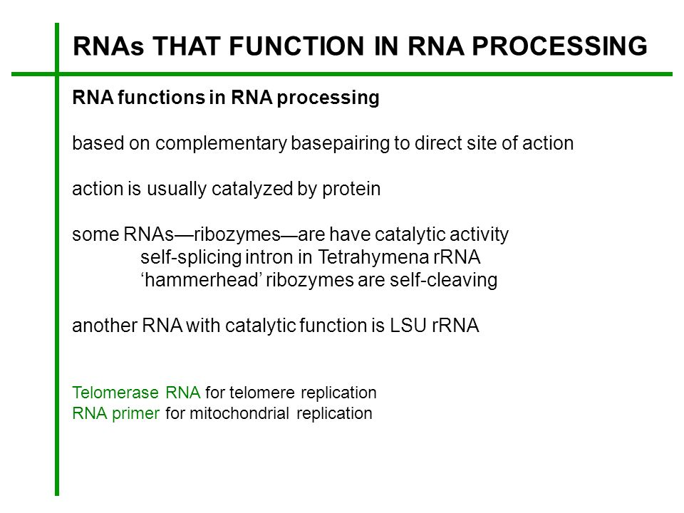 RNAs THAT FUNCTION IN RNA PROCESSING RNA functions in RNA processing based on complementary basepairing to direct site of action action is usually cat
