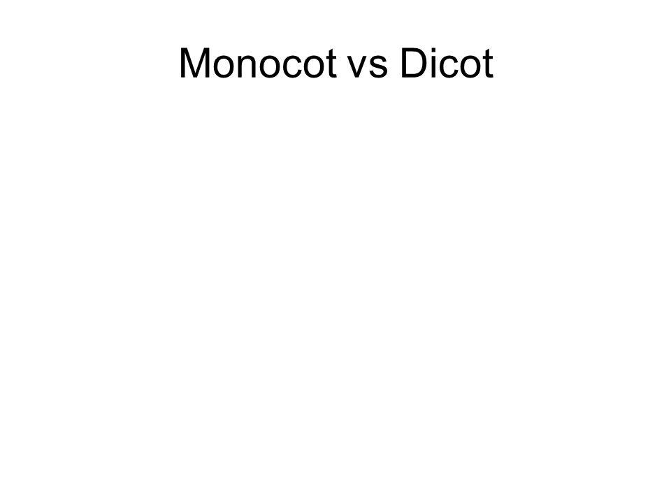 Monocot vs Dicot