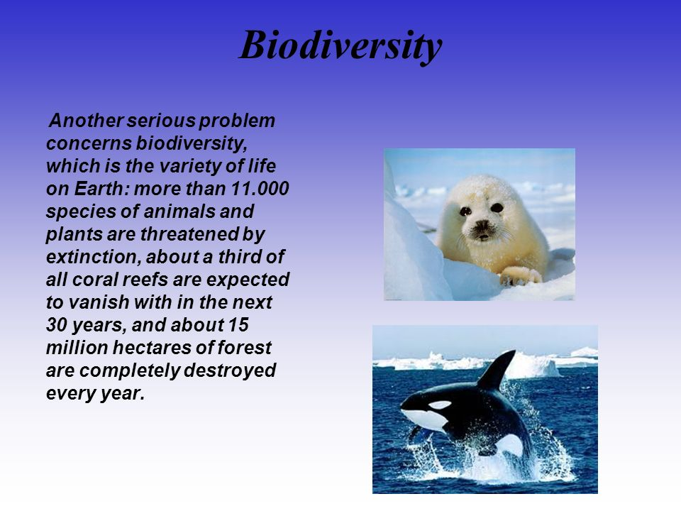 Biodiversity Another serious problem concerns biodiversity, which is the variety of life on Earth: more than 11.000 species of animals and plants are threatened by extinction, about a third of all coral reefs are expected to vanish with in the next 30 years, and about 15 million hectares of forest are completely destroyed every year.