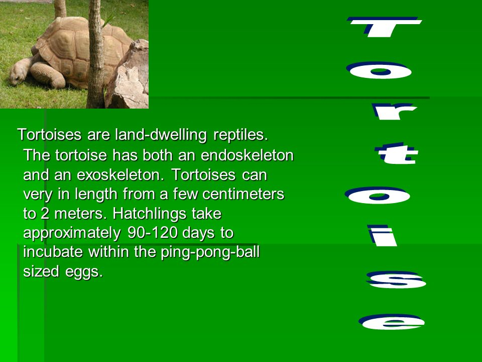 The earliest known turtles date from 215 million years ago. 300 turtle species are alive today, and some are highly endangered. Turtles dont lay eggs