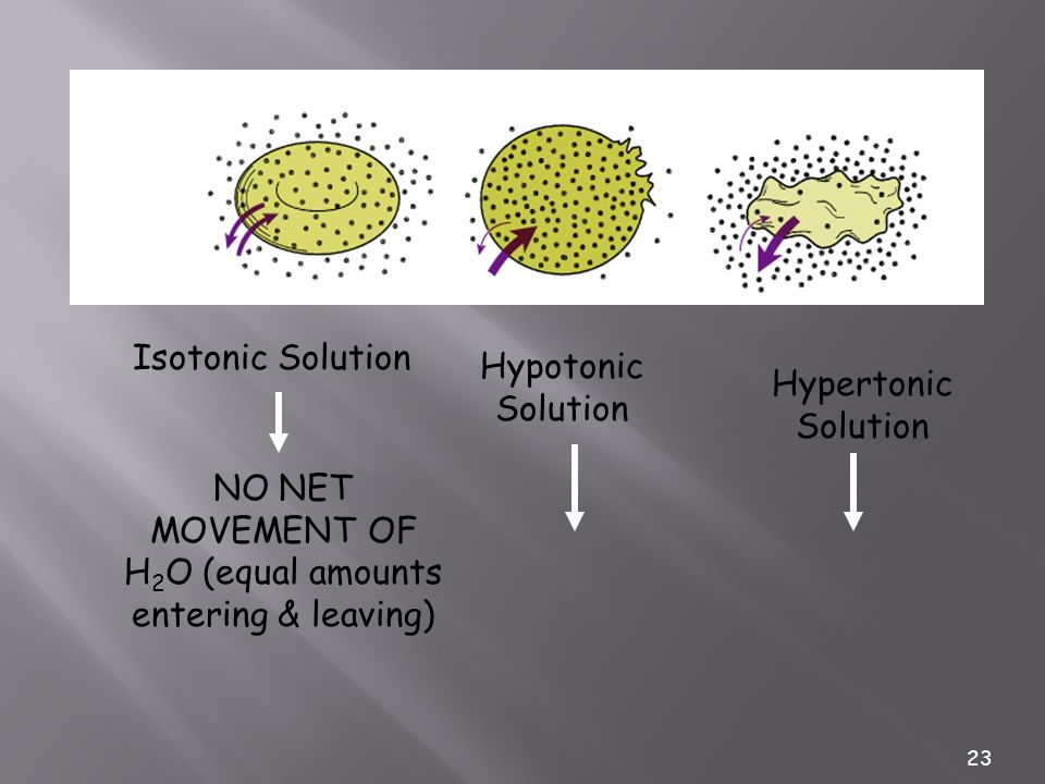 23 Isotonic Solution NO NET MOVEMENT OF H 2 O (equal amounts entering & leaving) Hypotonic Solution Hypertonic Solution