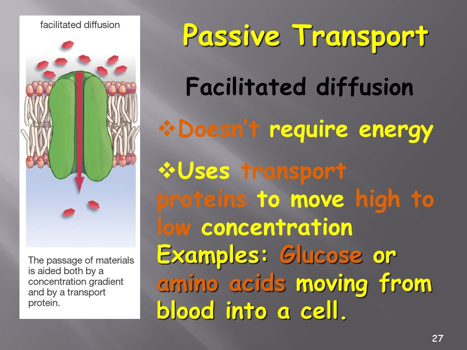 27 Passive Transport Facilitated diffusion Doesnt require energy Uses transport proteins to move high to low concentration Examples: Glucose or amino