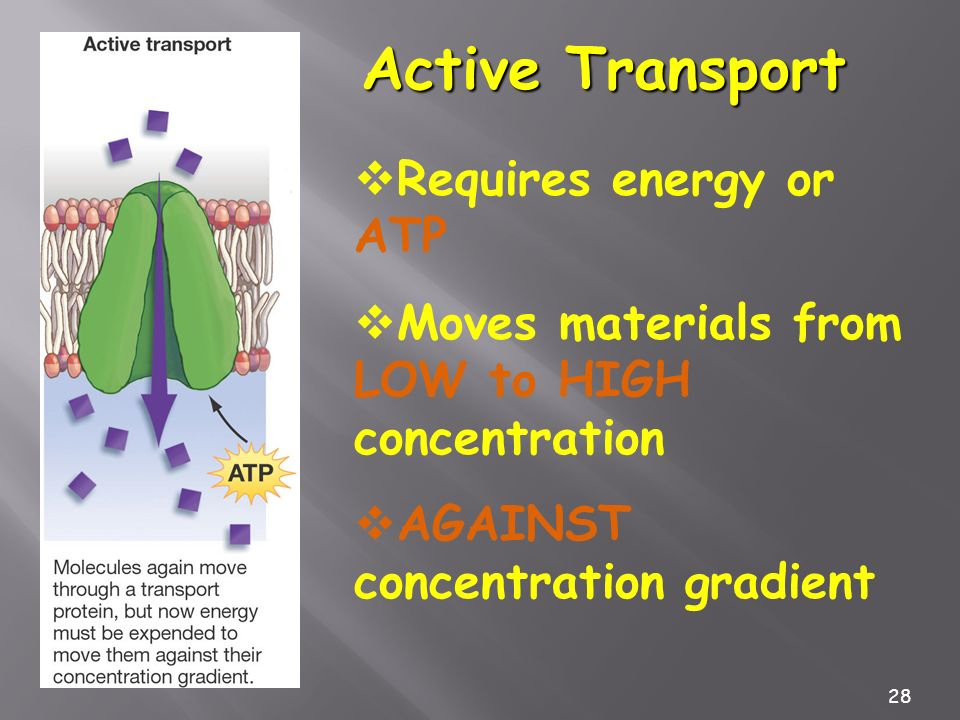 28 Active Transport Requires energy or ATP Moves materials from LOW to HIGH concentration AGAINST concentration gradient