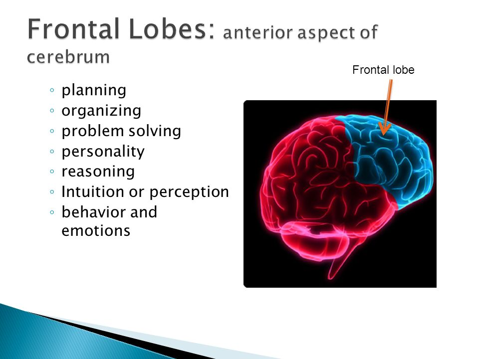 planning organizing problem solving personality reasoning Intuition or perception behavior and emotions Frontal lobe