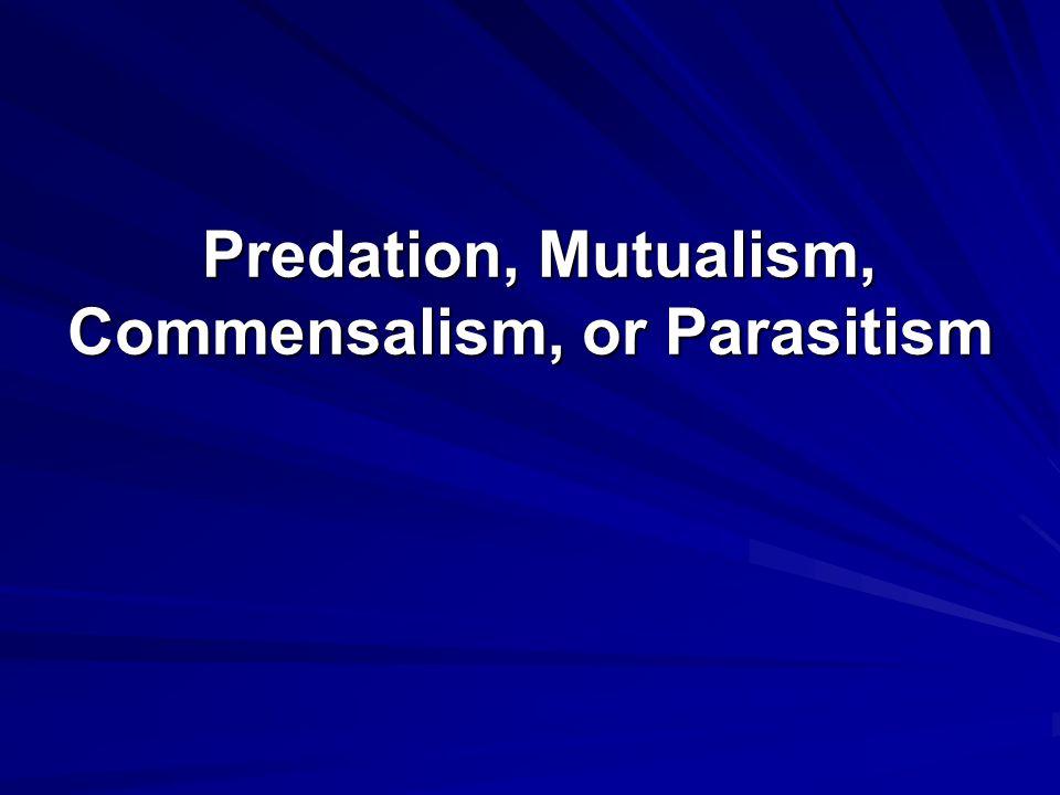 Predation, Mutualism, Commensalism, or Parasitism Predation, Mutualism, Commensalism, or Parasitism