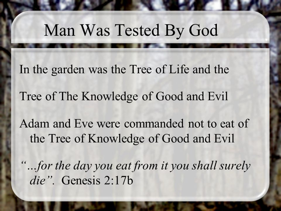 Man Was Tested By God In the garden was the Tree of Life and the Tree of The Knowledge of Good and Evil Adam and Eve were commanded not to eat of the