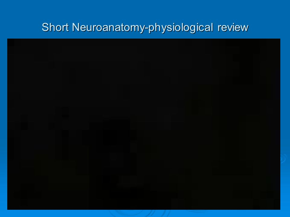 Short Neuroanatomy-physiological review