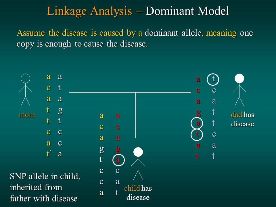 Linkage Analysis – Dominant Model Assume the disease is caused by a dominant allele, meaning one copy is enough to cause the disease.