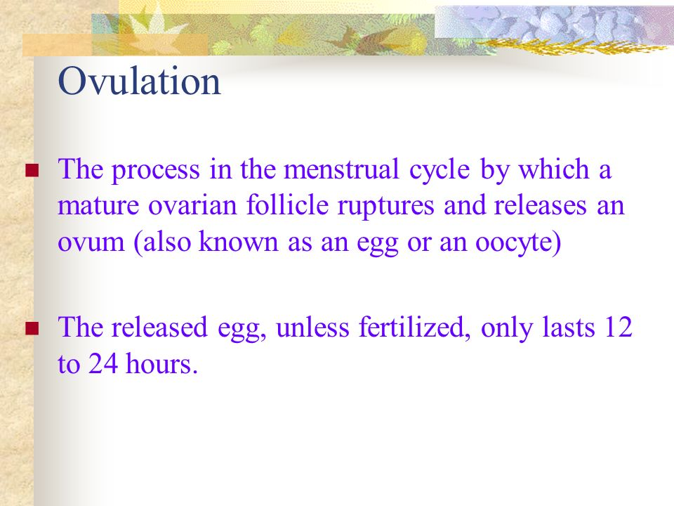 The Menstrual Cycle Follicular (Proliferative) phase Days 1 through 6 Beginning of menstrual flow to end of blood flow Days 7 – 13 endometrium thicken