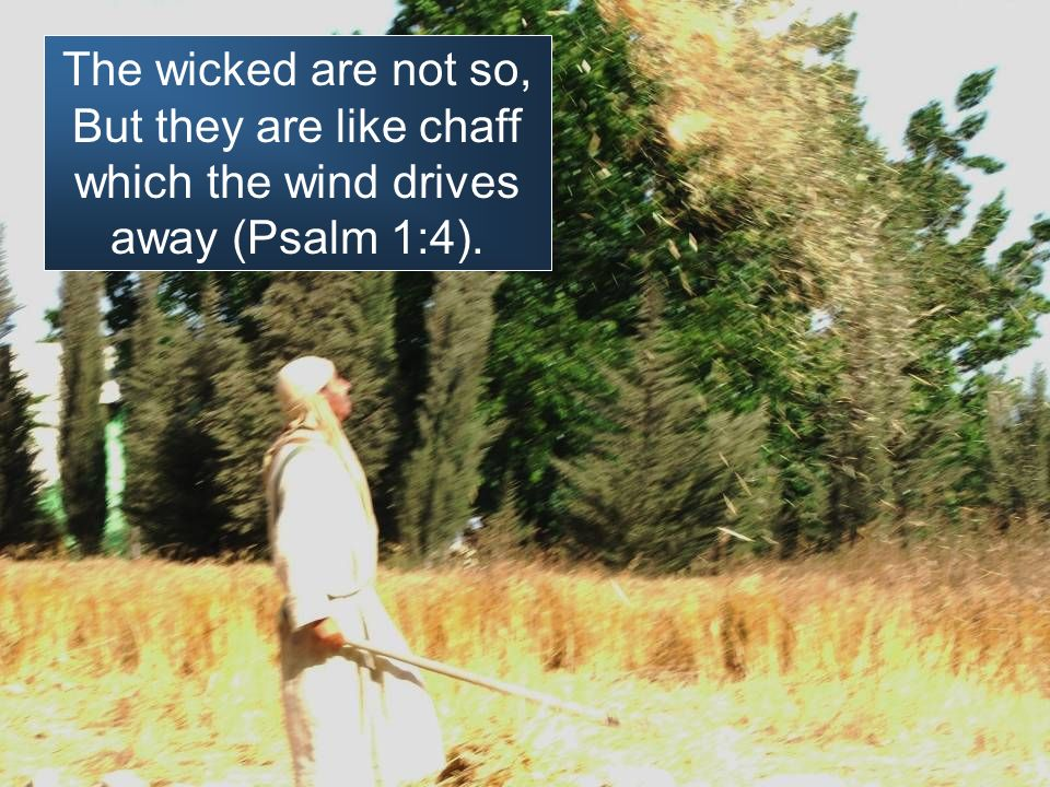 The wicked are not so, But they are like chaff which the wind drives away (Psalm 1:4).