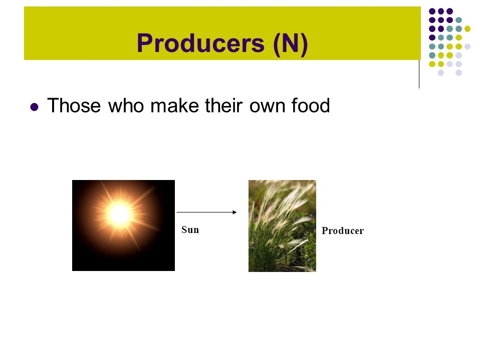 Producers (N) Those who make their own food Sun Producer