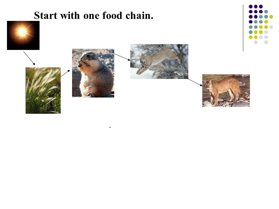 Start with one food chain..