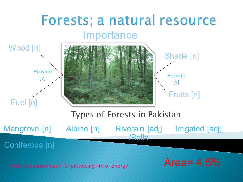 Types of Forests in Pakistan Alpine [n]Mangrove [n]Irrigated [adj] Riverain [adj] /Bella Coniferous [n] Importance Wood [n] Fuel [n] Fruits [n] Shade