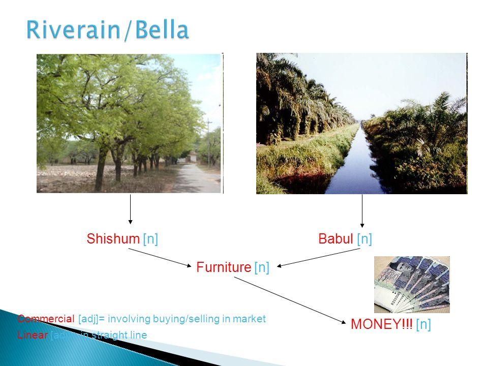Linear [adj]= in straight line Shishum [n]Babul [n] Commercial [adj]= involving buying/selling in market Furniture [n] MONEY!!! [n]