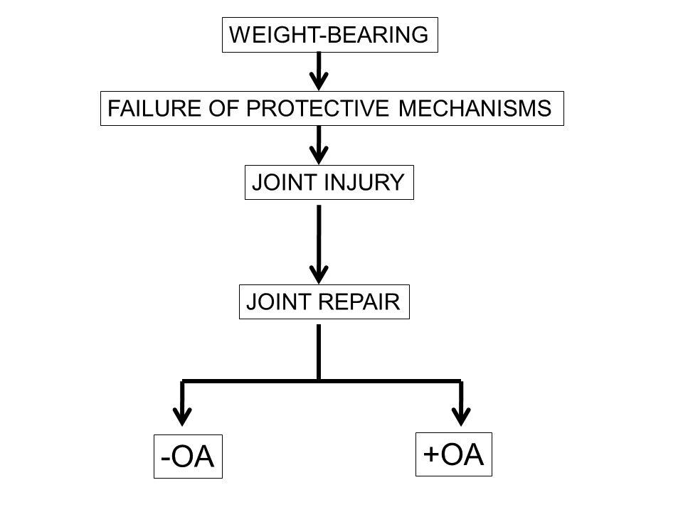 Main joint protector Cartilage Avascular Aneural Load-bearing Low friction