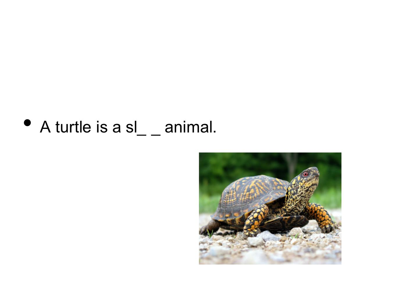 A turtle is a sl_ _ animal.