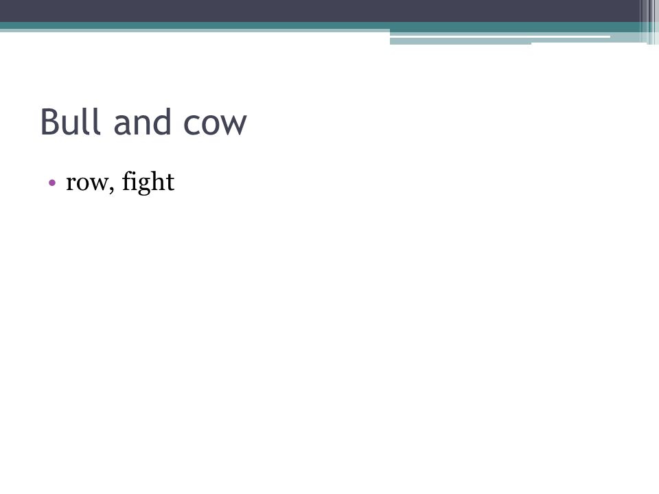 Bull and cow row, fight