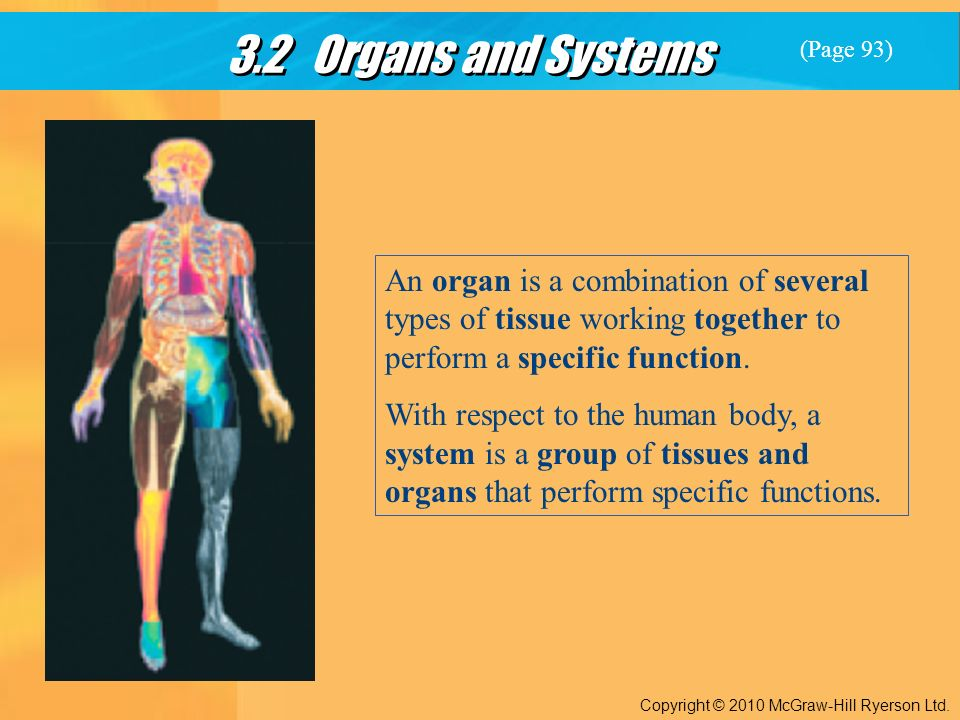 3.2 Organs and Systems Copyright © 2010 McGraw-Hill Ryerson Ltd.