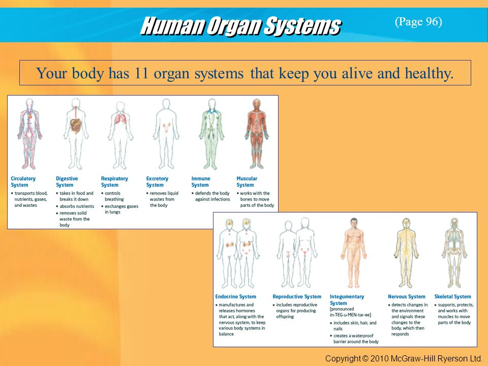 Human Organ Systems Copyright © 2010 McGraw-Hill Ryerson Ltd.