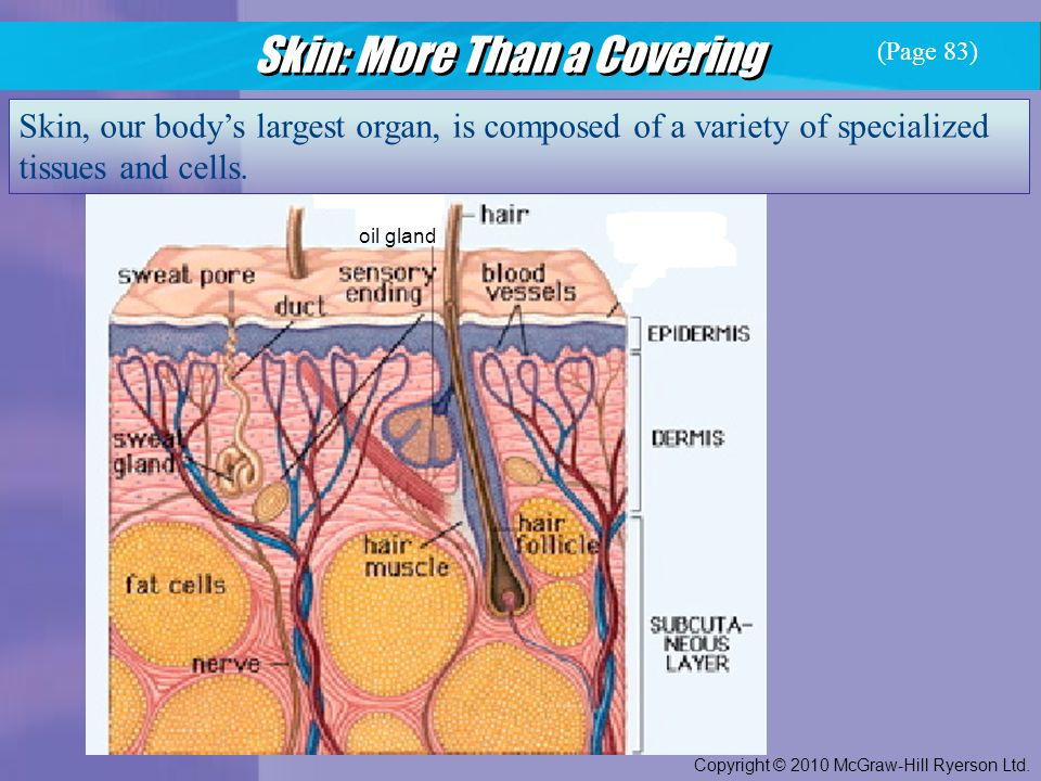 Skin: More Than a Covering Copyright © 2010 McGraw-Hill Ryerson Ltd.