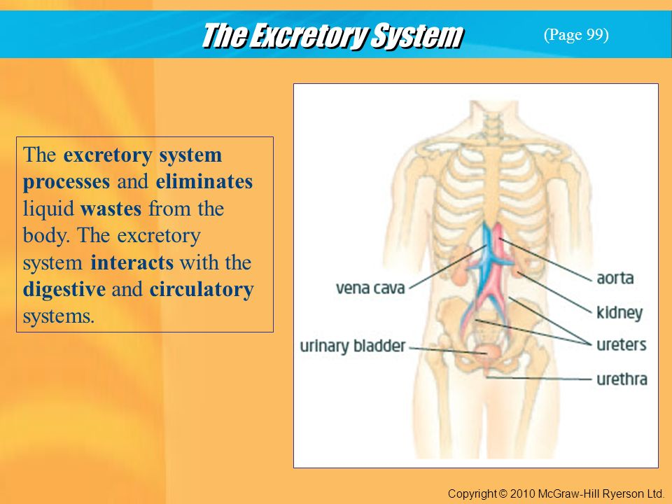 The Excretory System Copyright © 2010 McGraw-Hill Ryerson Ltd.