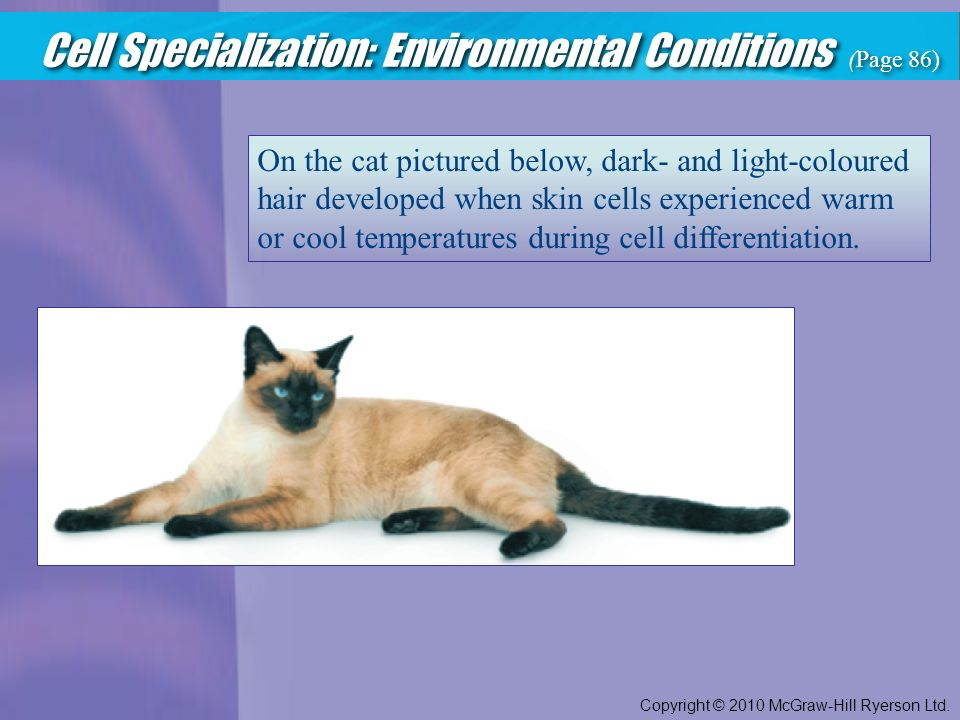 Cell Specialization: Environmental Conditions (Page 86) Copyright © 2010 McGraw-Hill Ryerson Ltd.
