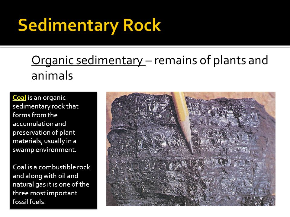 Organic sedimentary – remains of plants and animals Coal is an organic sedimentary rock that forms from the accumulation and preservation of plant mat