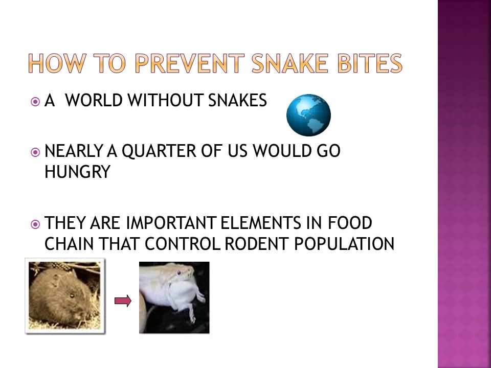 A WORLD WITHOUT SNAKES NEARLY A QUARTER OF US WOULD GO HUNGRY THEY ARE IMPORTANT ELEMENTS IN FOOD CHAIN THAT CONTROL RODENT POPULATION