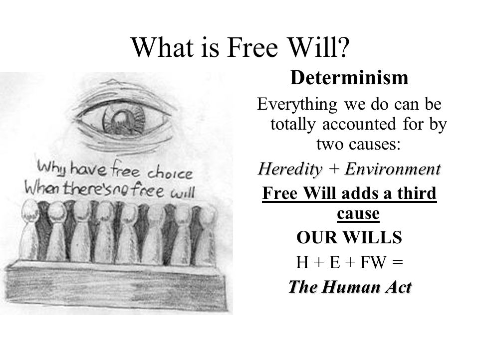 What is Free Will.