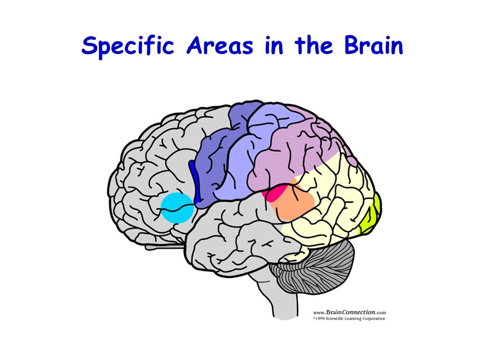 Specific Areas in the Brain
