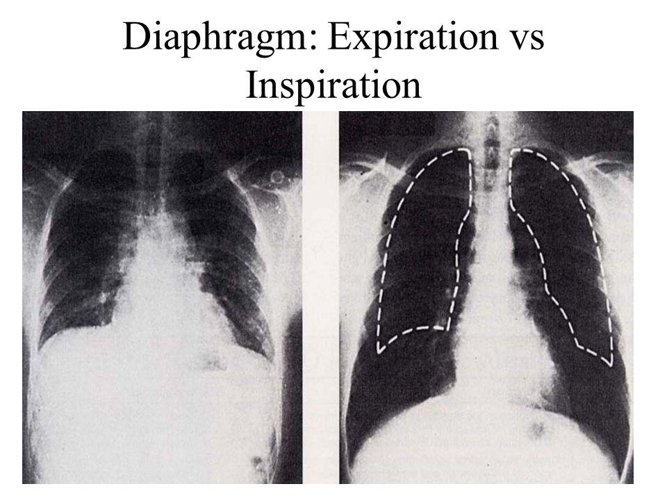 Diaphragm: Expiration vs Inspiration