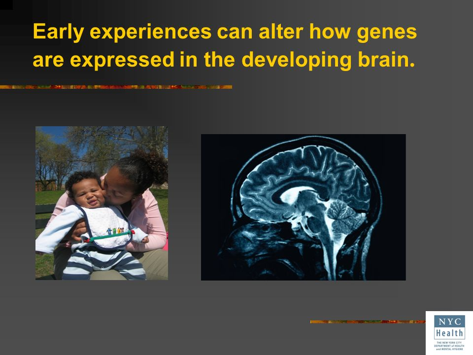 Early experiences can change the neural connections in the developing brain.