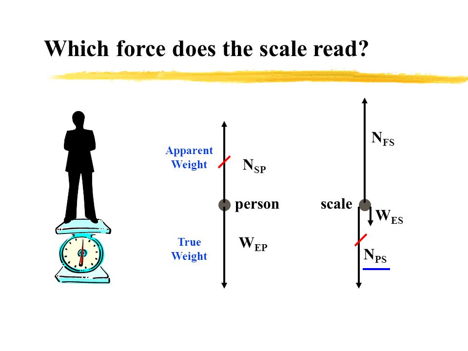 W EP N SP person Which force does the scale read? N FS W ES N PS scale Apparent Weight True Weight