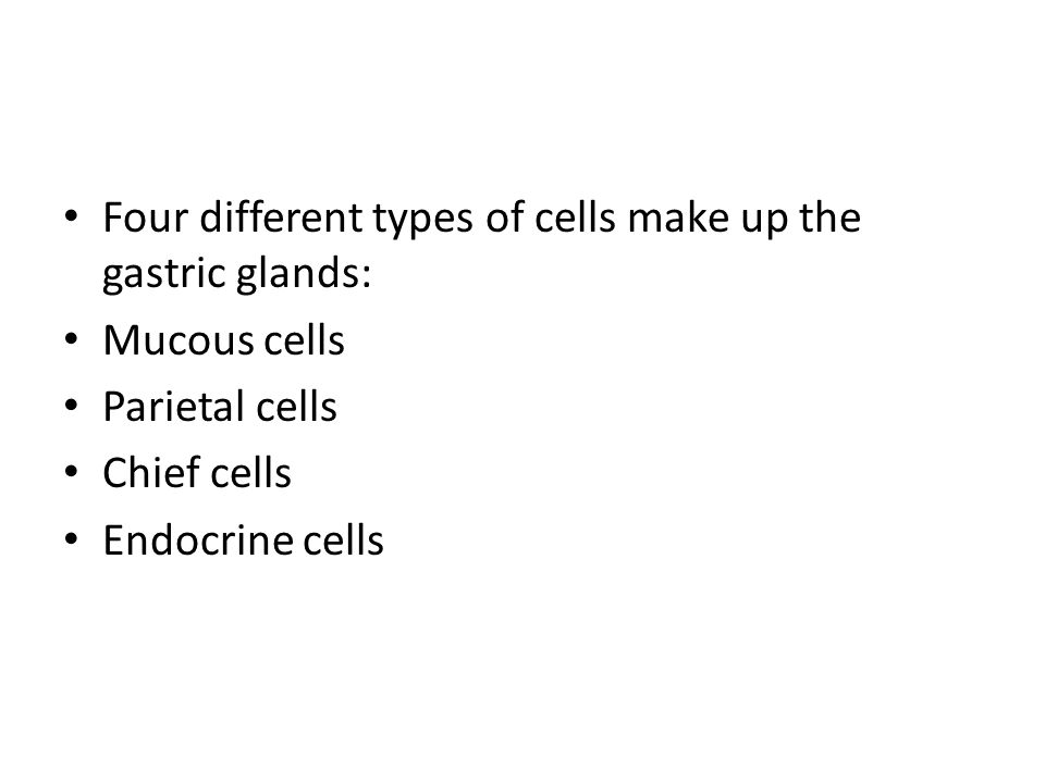 Four different types of cells make up the gastric glands: Mucous cells Parietal cells Chief cells Endocrine cells